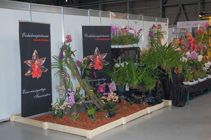 exotické orchideje